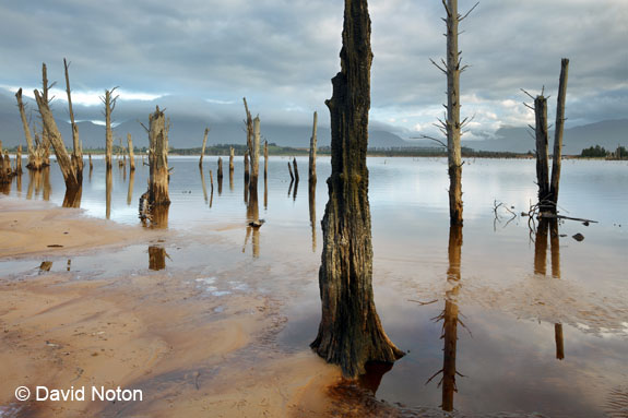 EOS_5DS_Sample_David_Noton_14-24mm_trees_in_water